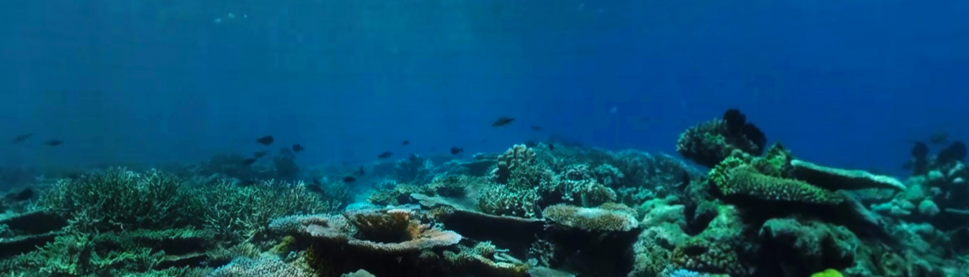 Coral Compass: Fighting Climate Change in Palau
